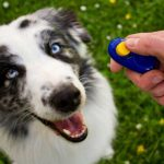 Dog Training with Clicker Pros & Cons